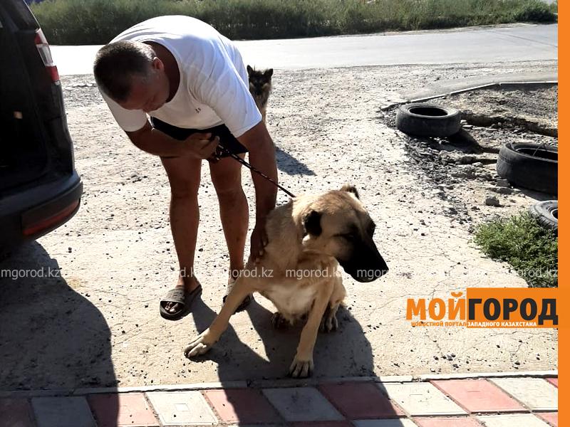 Новости Атырау - История атырауской Хатико: собака неделю ждала хозяев в степи