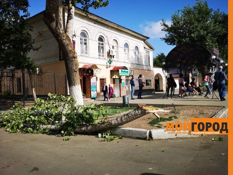 Ураганный ветер в ЗКО повалил деревья, разбил автомобили и сорвал кровлю школ (фото)