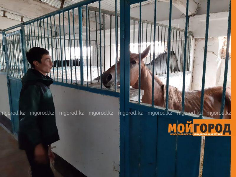 Жители Уральска возмущены фотографиями изможденной лошади из ДЮСШ