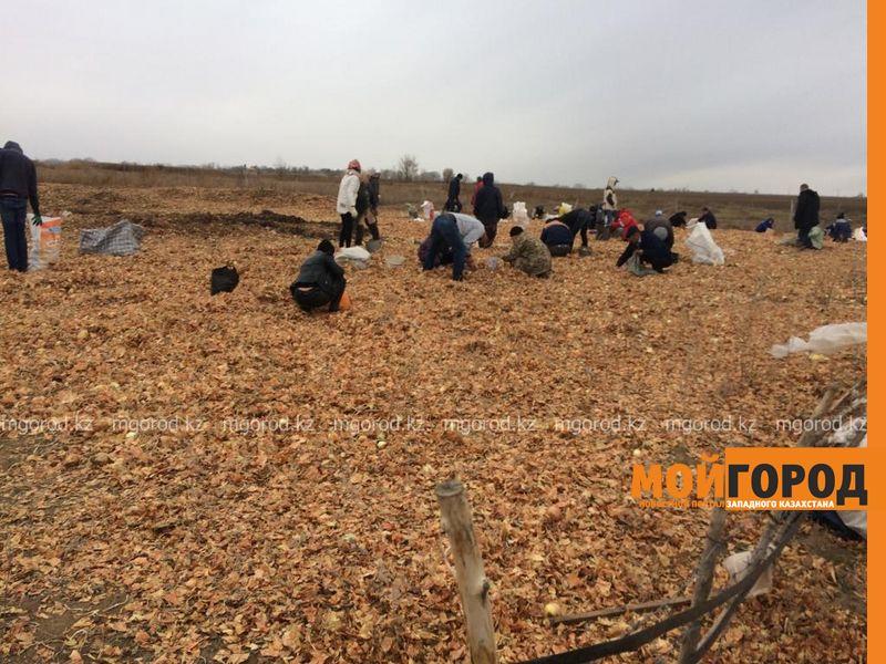 Новости Уральск - Жители ЗКО мешками вывозят высыпанный в степи лук (фото, видео)