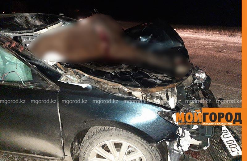 Новости Уральск - Toyota Camry сбила лошадей на трассе в ЗКО