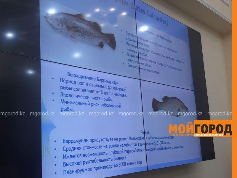 Новости Уральск - Морскую рыбу будут выращивать в ЗКО