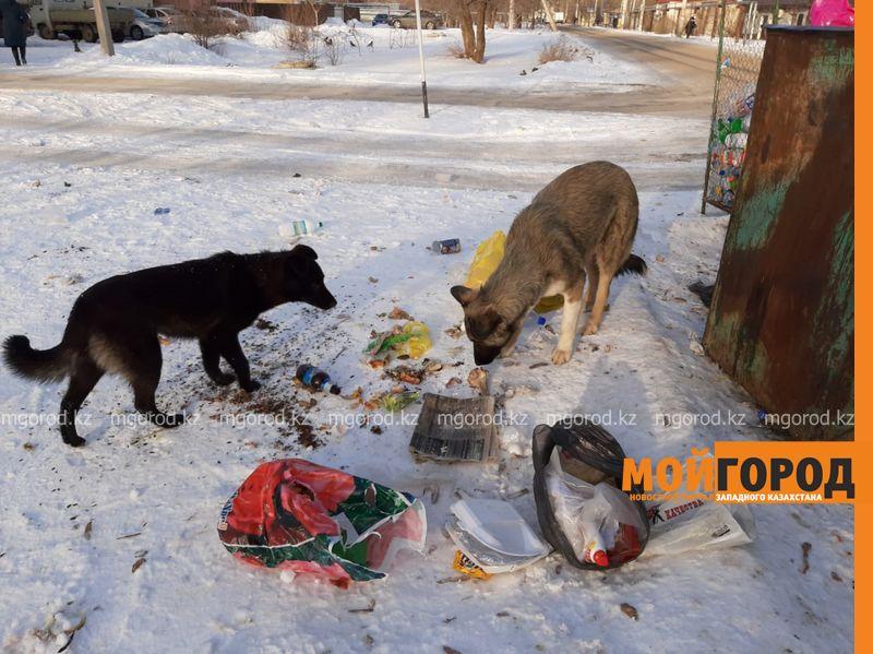 Стерилизовать собак в Уральске будут работники центра при госвузе