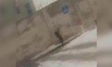 Переброс телефонов в колонию строгого режима в Уральске попал на видео