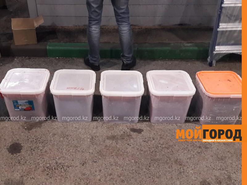 150 кг икры пытались незаконно ввезти из России в Казахстан