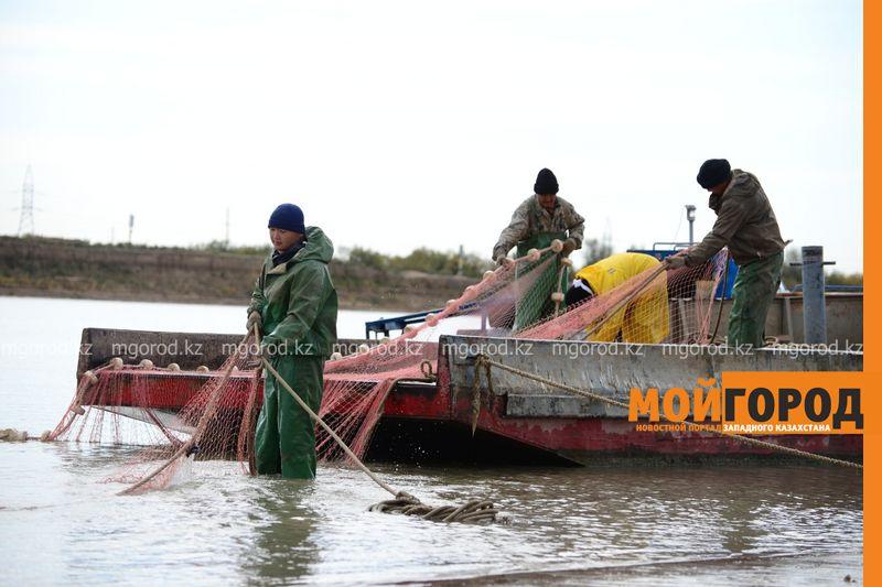 Более четырех тысяч тонн рыбы экспортировали из Атырауской области Более четырех тысяч тонн рыбы экспортировали из Атырауской области