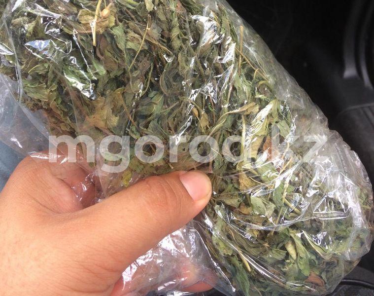 Житель Атырау во дворе своего дома выращивал коноплю Житель Атырау во дворе своего дома выращивал коноплю