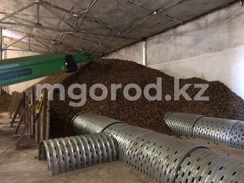 Более шести тысяч тонн картофеля собрали в ЗКО 6655 тонн картофеля собрали в ЗКО