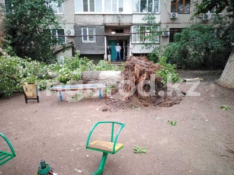 Деревья упали на машины в Уральске Деревья упали на машины в Уральске