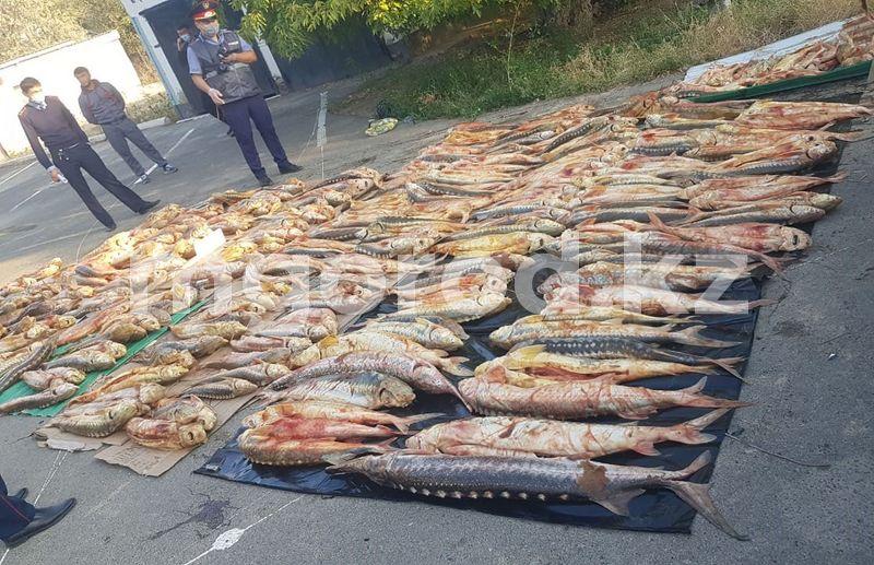 50 килограммов осетра изъяли полицейские ЗКО Более тонны рыбы осетровых пород перевозили жители ЗКО