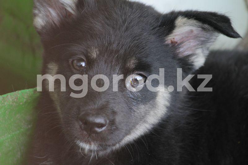 Житель Атырау заколол собаку вилами на глазах у детей В Уральске некому отлавливать бродячих животных