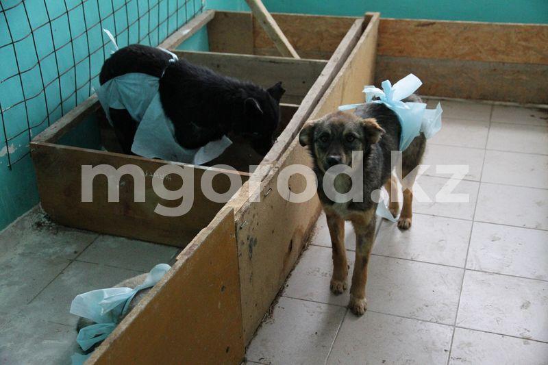 35 млн тенге выделили на отлов и стерилизацию бродячих животных в Уральске Отлов и стерилизацию бродячих животных начали в Уральске