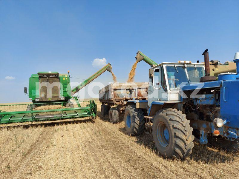 В ЗКО зерна собрали больше, чем в прошлом году В ЗКО зерна собрали больше , чем в прошлом году