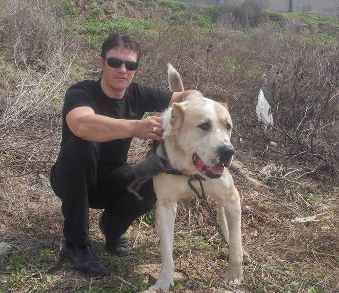 Убивший вилами соседскую собаку житель Атырау обжаловал приговор Убивший вилами соседскую собаку житель Атырау обжаловал приговор