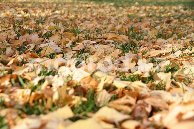 В ЗКО сохраняется штормовое предупреждение Погода на 27 октября