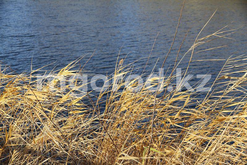 Сильный ветер ожидается в ЗКО Усиление ветра ожидается в ЗКО