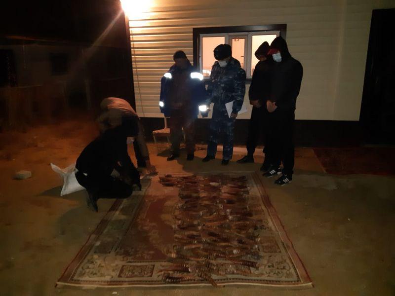 167 сайгачьих рогов нашли у сельчанина в Актюбинской области Рога и мясо сайгака нашли в доме сельчанина в Актюбинской области