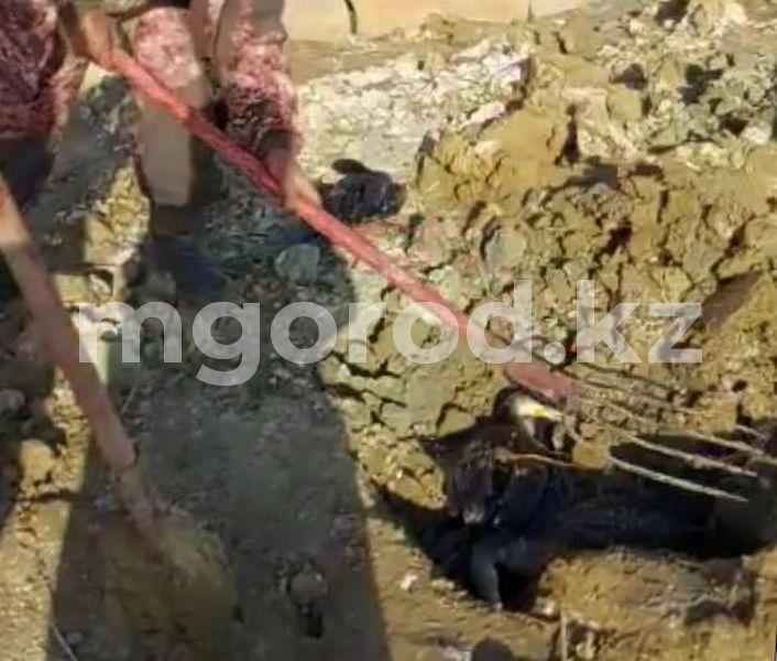 Массовая гибель птиц в Атырау произошла из-за пастереллеза Два десятка мертвых птиц обнаружили в атырауском государственном природном резервате «Ак Жайык» (видео)
