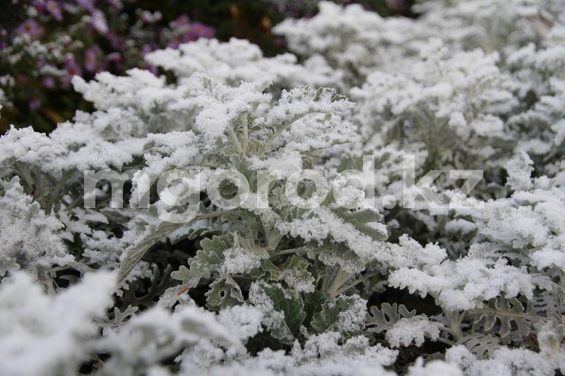 Погода на 26 ноября Первый снег выпал в Уральске