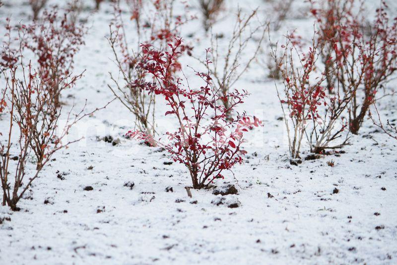 Погода на 5 декабря Первый снег выпал в Уральске
