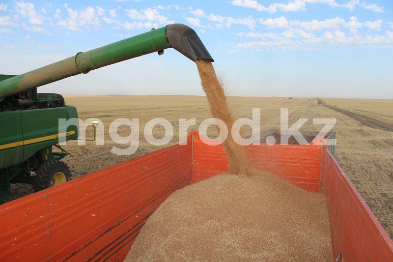 144 тысячи тонн пшеницы вывезли из ЗКО 260 тысяч тонн зерна собрали в ЗКО