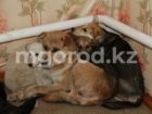 veterinariya (10)