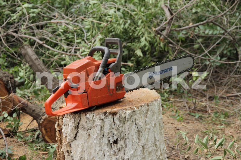 Штраф за незаконную вырубку деревьев в Казахстане увеличат в пять раз Штраф за незаконную вырубку деревьев в Казахстане увеличат в пять раз