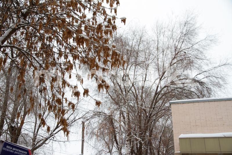 Сильный туман ожидается в ЗКО Погода на 5 января