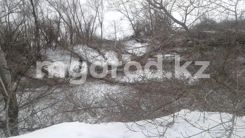 В Уральске на берегу Урала пилят деревья В Уральске на берегу Урала пилят деревья