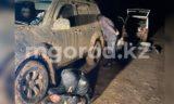 Жители ЗКО спиливали рога с туш мертвых сайгаков (фото)