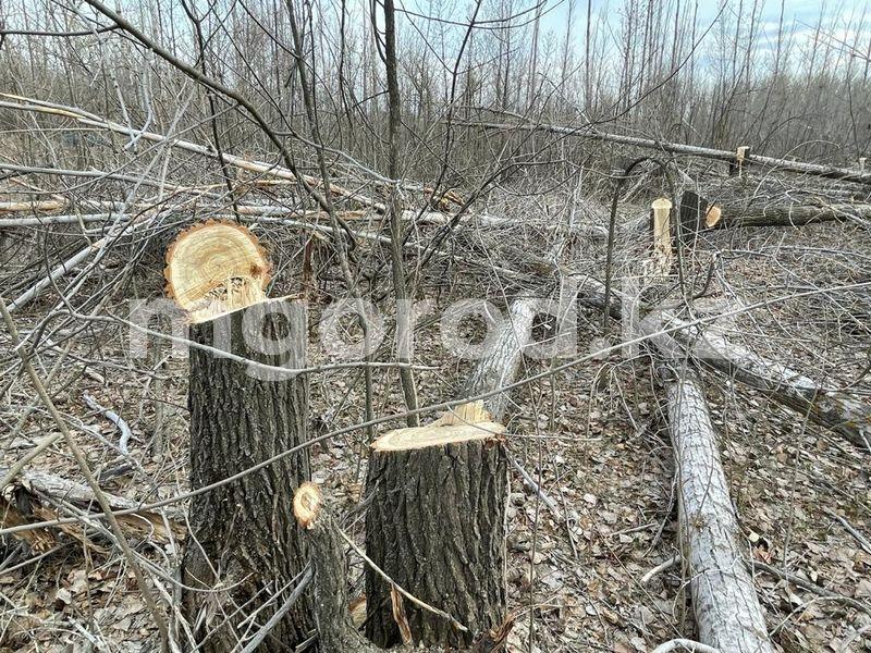 В Уральске вырубают деревья между городским парком и станцией юннатов В Уральске массово вырубают деревья