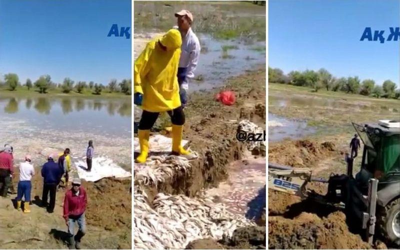Около тонны мертвой рыбы обнаружено в водоёме в Атырауской области Около тонны мертвой рыбы обнаружено в водоеме Атырауской области