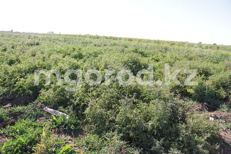 Фермеры Атырауской области вынуждены привозить рабочих из Узбекистана Фермеры Атырауской области вынуждены привозить рабочих из Узбекистана