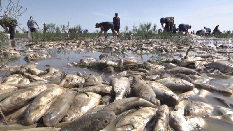 В Атырау озвучили масштабы замора рыбы В Атырау озвучили масштабы замора рыбы