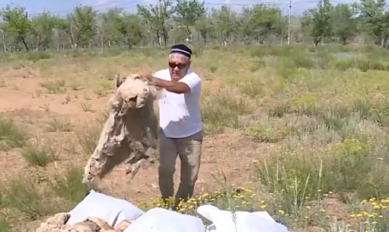 Фермеры сжигают шерсть из-за проблем со сбытом в Актюбинской области Фермеры сжигают шерсть из-за проблем со сбытом в Актюбинской области