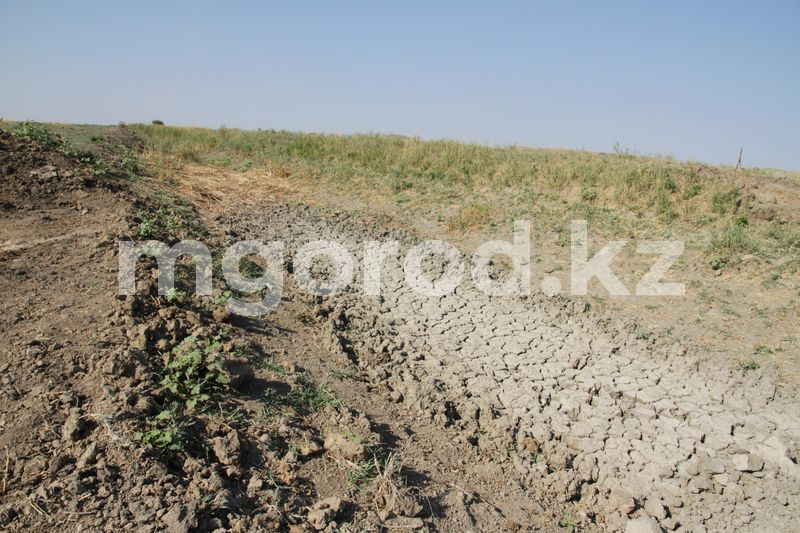 Засуха в августе побила пятилетний рекорд в Казахстане Джут в Казахстане: акимы на местах скрывают реальные цифры