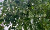 В Уральске ребёнок упал с дерева и получил серьёзные травмы