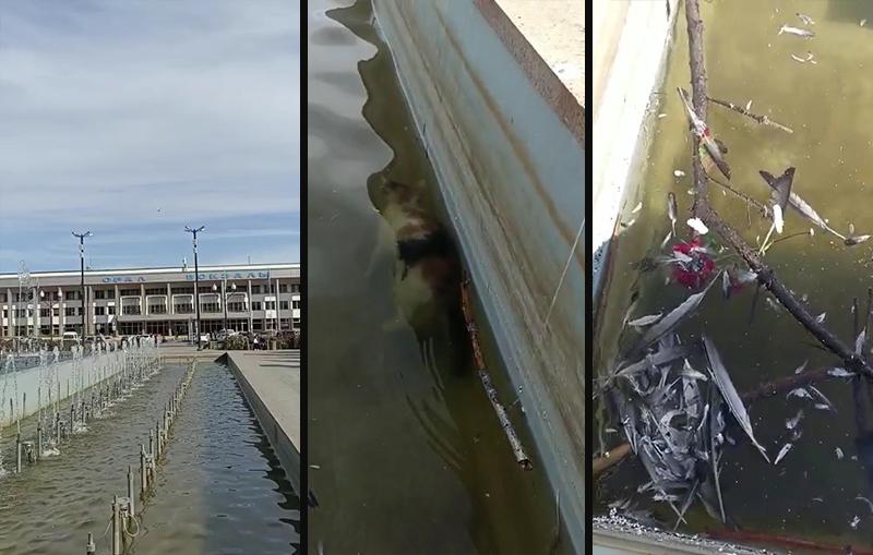 Уральцев возмутило видео с мёртвой кошкой в фонтане Уральцев возмутило видео с мертвой кошкой в фонтане