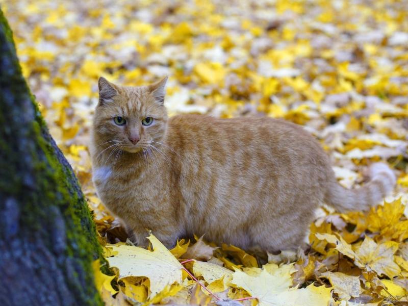Старейший музейный кот России, которого искали всем городом, вернулся Старейший музейный кот России, которого искали всем городом, вернулся